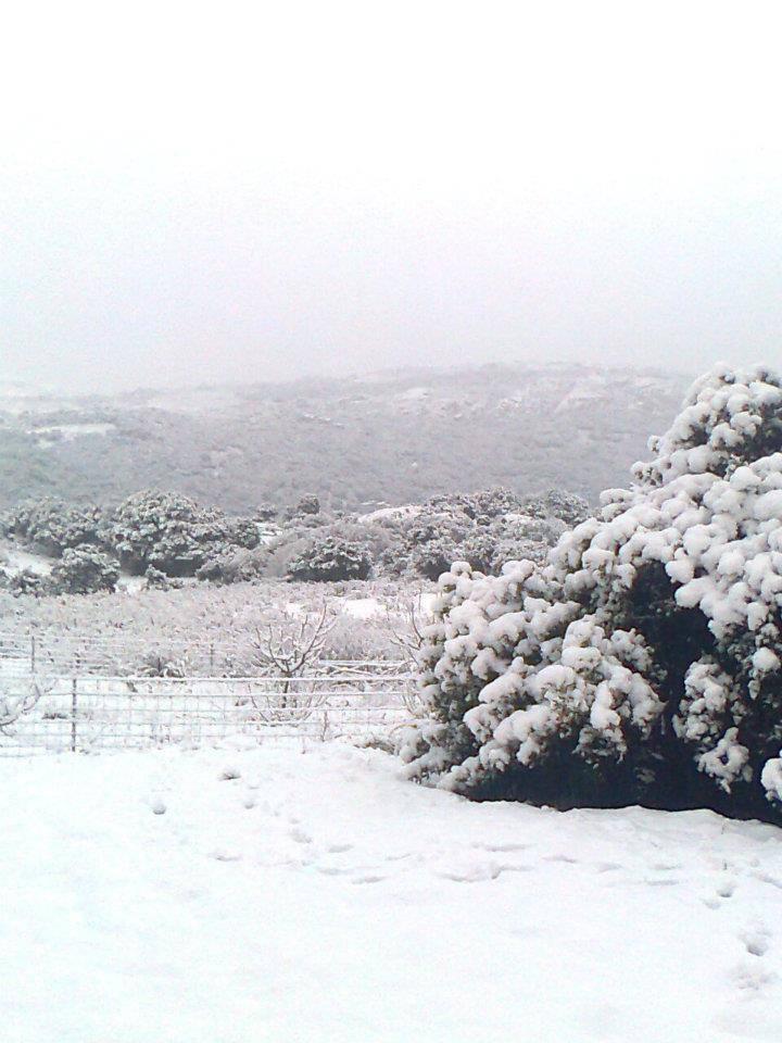 12026433 843436222440233 1755834104 n - La Sardegna sotto la neve, ricordi fotografici