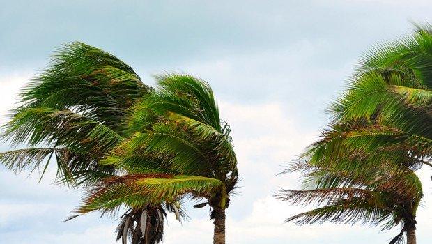 Vento bufera maestrale - Cagliari, Maestrale a oltre 100 km/h. Cadono alberi e cornicioni