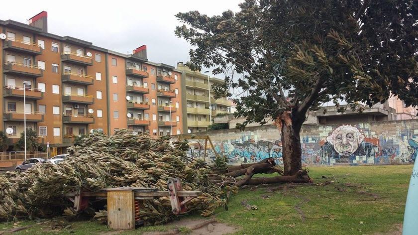 Quartu Sant'Elena un albero caduto sul parco giochi dei bambini. Foto di Tiziano Cocco.